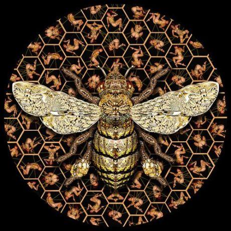 c36e1e7cb4a488ad823060e855943a85--bees-knees-bumble-bees