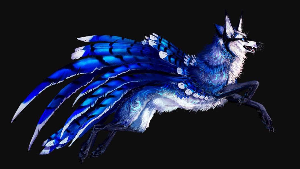 bluejay.wolf